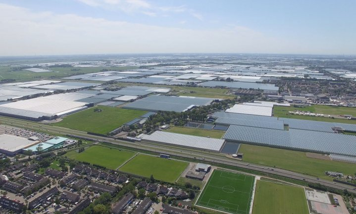 Is Dutch horticulture COVID proof in the long run?